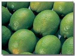 新知Q&A-新知:健康輕鬆作~每天飲用2杯檸檬水